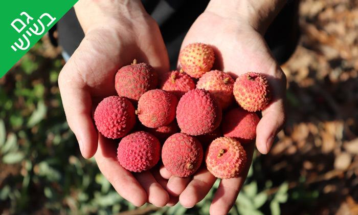 2 להתאהב בטבע: קטיף ליצ'י ופינת חי - קיבוץ מצובה בגליל המערבי