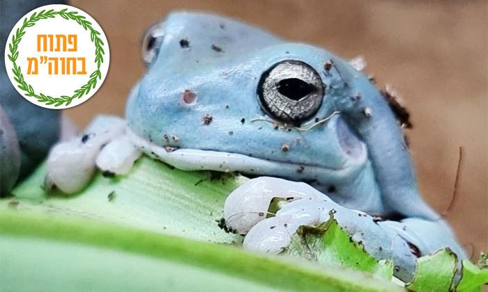 """10 חוות החיות של שלמה, נוקדים - מעל 100 מינים של בע""""ח מהארץ ומהעולם, גם בסוכות"""