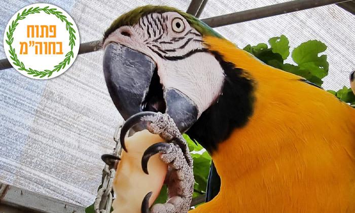 """12 חוות החיות של שלמה, נוקדים - מעל 100 מינים של בע""""ח מהארץ ומהעולם, גם בסוכות"""