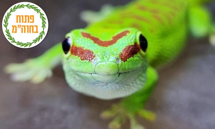 """4 חוות החיות של שלמה, נוקדים - מעל 100 מינים של בע""""ח מהארץ ומהעולם, גם בסוכות"""