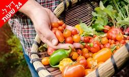 """קטיף ירקות לכל המשפחה בחוה""""מ"""