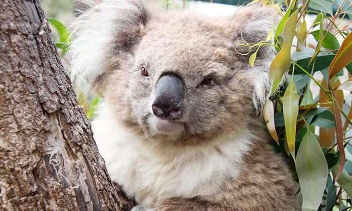 3 גן גורו - פארק אוסטרלי ייחודי לכל המשפחה