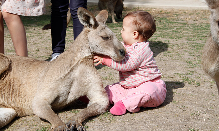 4 גן גורו - פארק אוסטרלי ייחודי לכל המשפחה