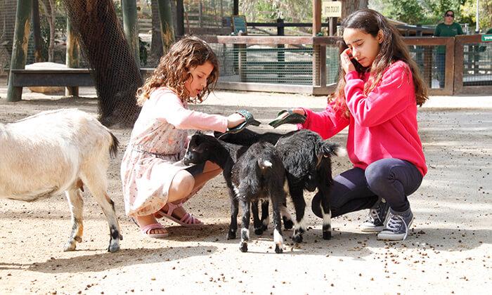 6 גן גורו - פארק אוסטרלי ייחודי לכל המשפחה