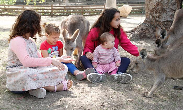 7 גן גורו - פארק אוסטרלי ייחודי לכל המשפחה