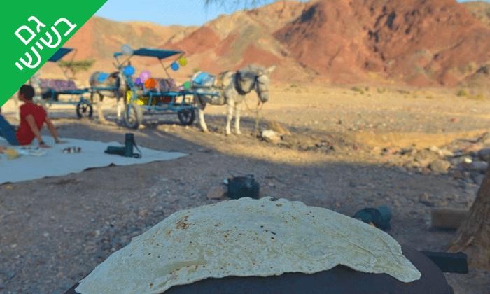 4 כרכרות חמורים בחוות הגמלים באילת, כולל אירוח