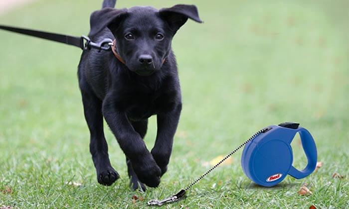 5 רצועת Flexi נמתחת לכלב